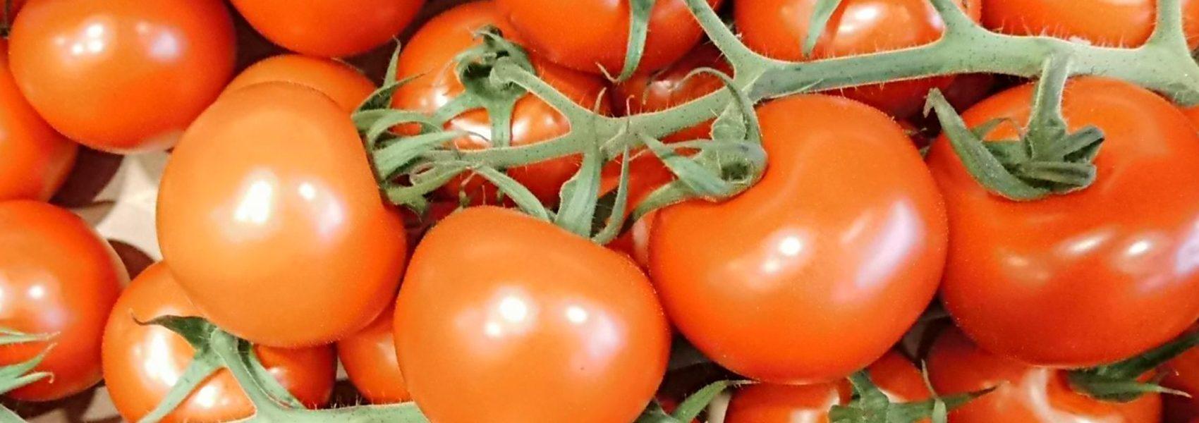 Große Auswahl an Tomaten