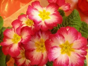 Blumen 261
