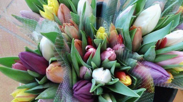 Tulpen aus den Vierlanden